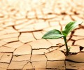 Economia della Formazione come Politica Economica per la Crescita